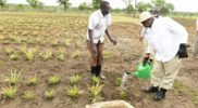 President Museveni to officially open the Agric show tomorrow