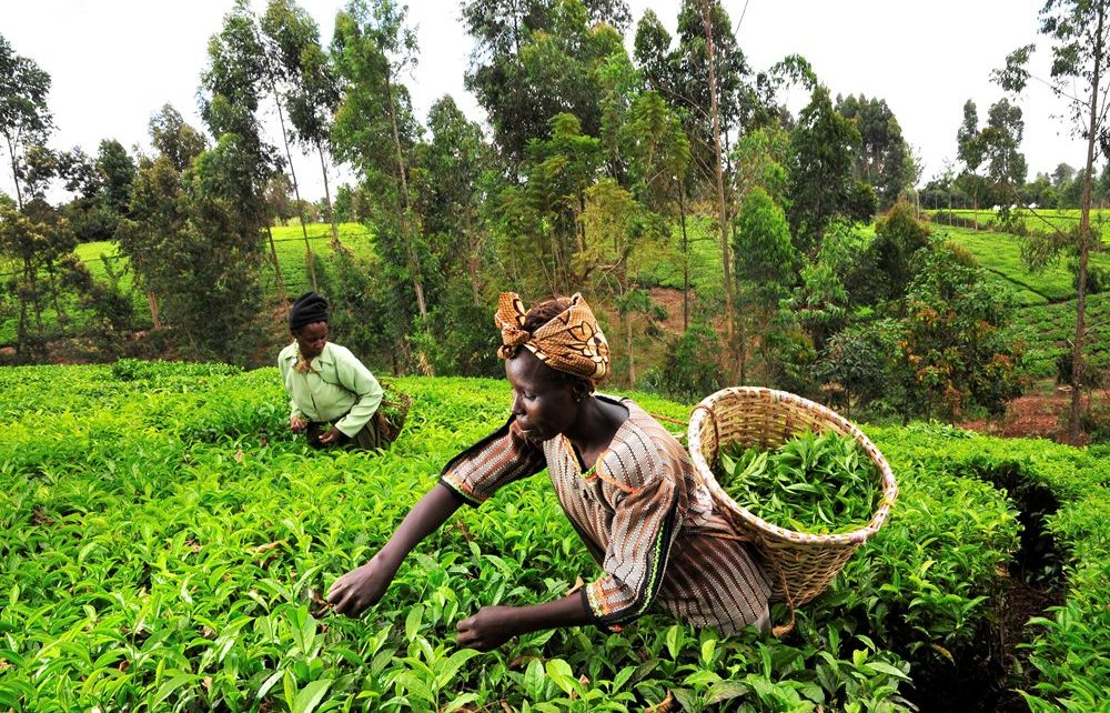 Digital agriculture platform to help African farmers improve crop