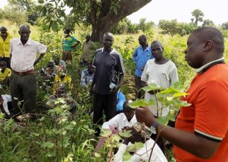 Uganda Cotton Farmers to get training in modern production
