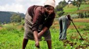 EAC small scale farmers  to Benefit from a $5m capital loan