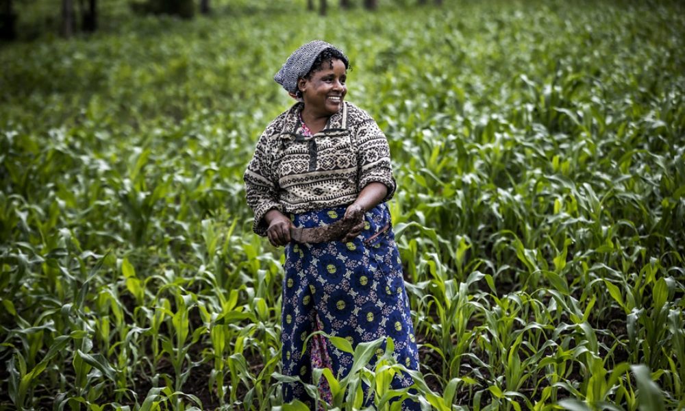 East African farmers and producers under their umbrella organization Fair-trade East and Central Africa Network have pointed out the lack of markets for their produces as a major hindrance towards them achieving the middle-income status.